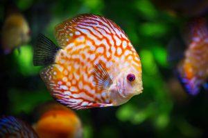Blog językowy - blog o nauce angielskiego - porównania idiomatyczne - fish