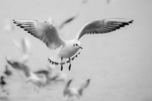 Blog językowy - blog o nauce angielskiego - porównania idiomatyczne - bird