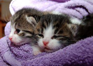 Blog językowy - blog o nauce angielskiego - porównania idiomatyczne - cat