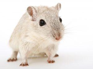 Blog językowy - blog o nauce angielskiego - porównania idiomatyczne - mouse