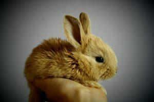 Blog językowy - blog o nauce angielskiego - porównania idiomatyczne -rabbit